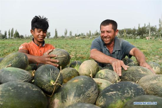 Farmers busy with collecting Jiashi cantaloupes in Kashgar, Xinjiang