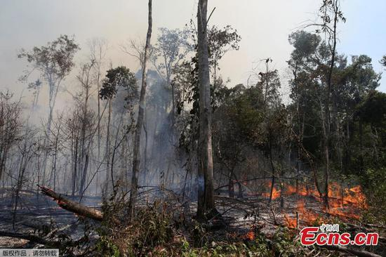 Firefighters mobilised to fight fires in Amazon rainforest