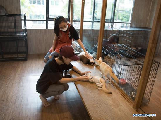 Animal Cafe in Bangkok, Thailand
