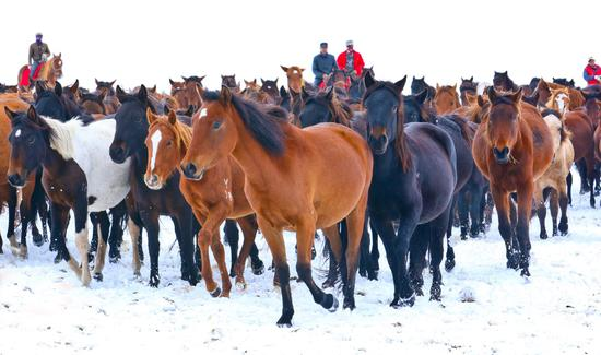 Galloping through China's oldest horse farm in the snow